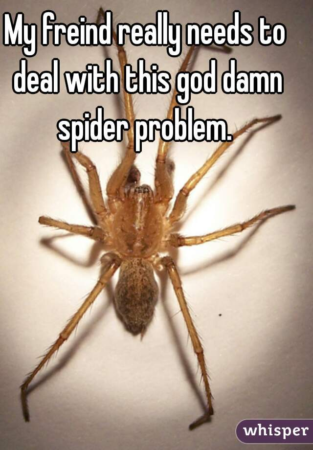 My freind really needs to deal with this god damn spider problem.
