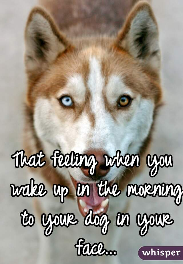 That feeling when you wake up in the morning to your dog in your face...