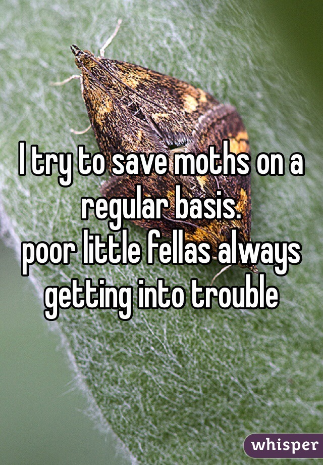 I try to save moths on a regular basis. poor little fellas always getting into trouble