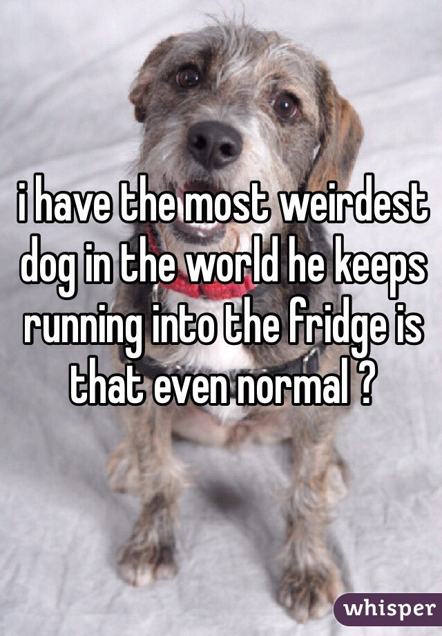 i have the most weirdest dog in the world he keeps running into the fridge is that even normal ?