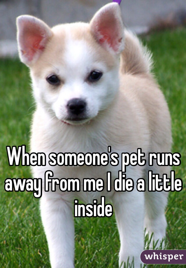 When someone's pet runs away from me I die a little inside