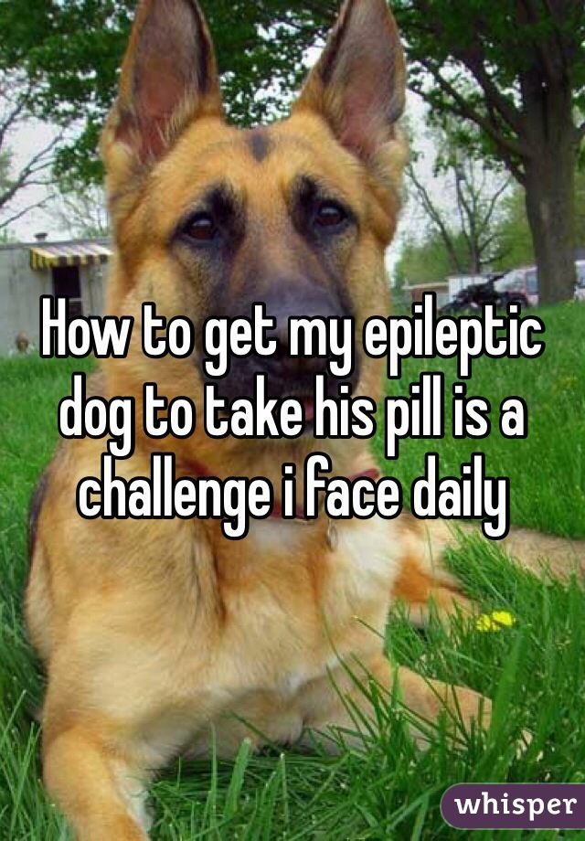 How to get my epileptic dog to take his pill is a challenge i face daily