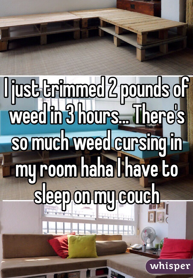 I just trimmed 2 pounds of weed in 3 hours... There's so much weed cursing in my room haha I have to sleep on my couch