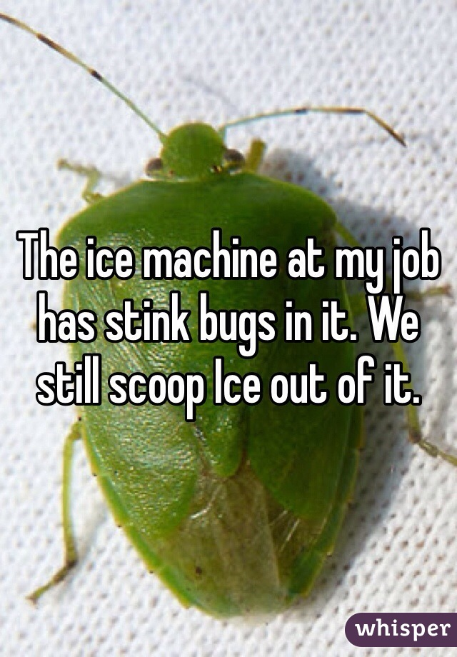 The ice machine at my job has stink bugs in it. We still scoop Ice out of it.