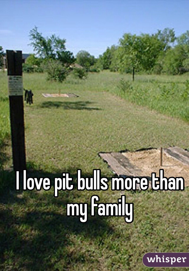 I love pit bulls more than my family