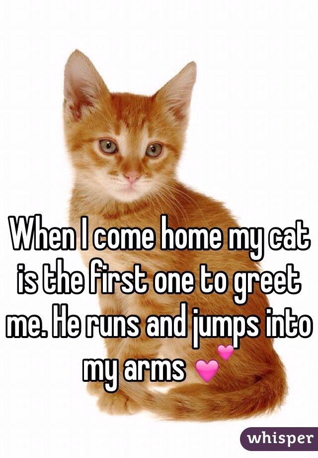 When I come home my cat is the first one to greet me. He runs and jumps into my arms 💕
