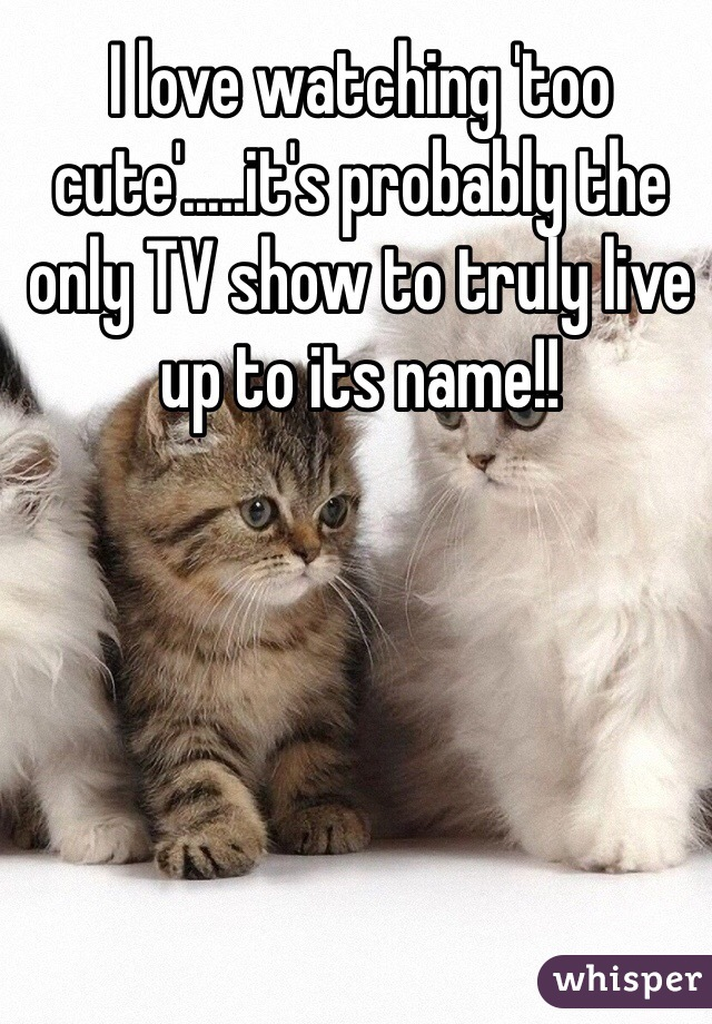 I love watching 'too cute'.....it's probably the only TV show to truly live up to its name!!