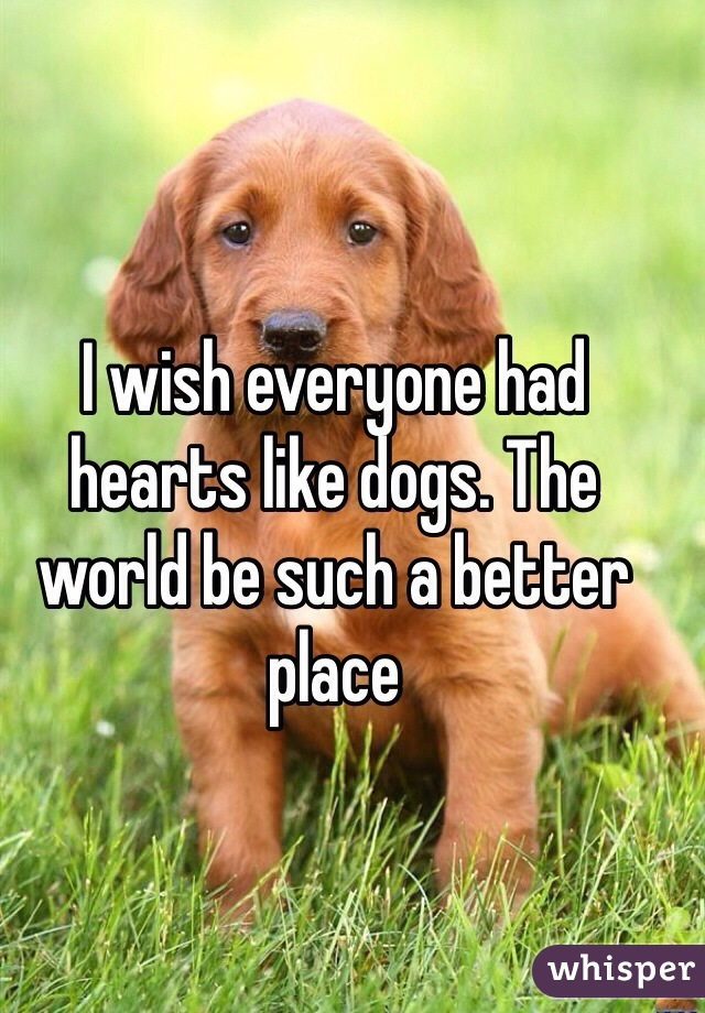 I wish everyone had hearts like dogs. The world be such a better place