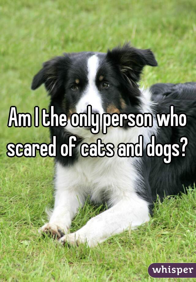Am I the only person who scared of cats and dogs?