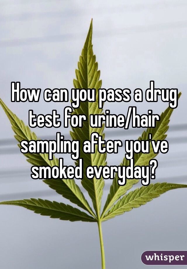 How can you pass a drug test for urine/hair sampling after you've smoked everyday?