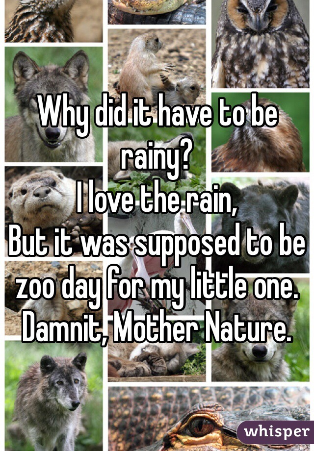 Why did it have to be rainy? I love the rain, But it was supposed to be zoo day for my little one. Damnit, Mother Nature.