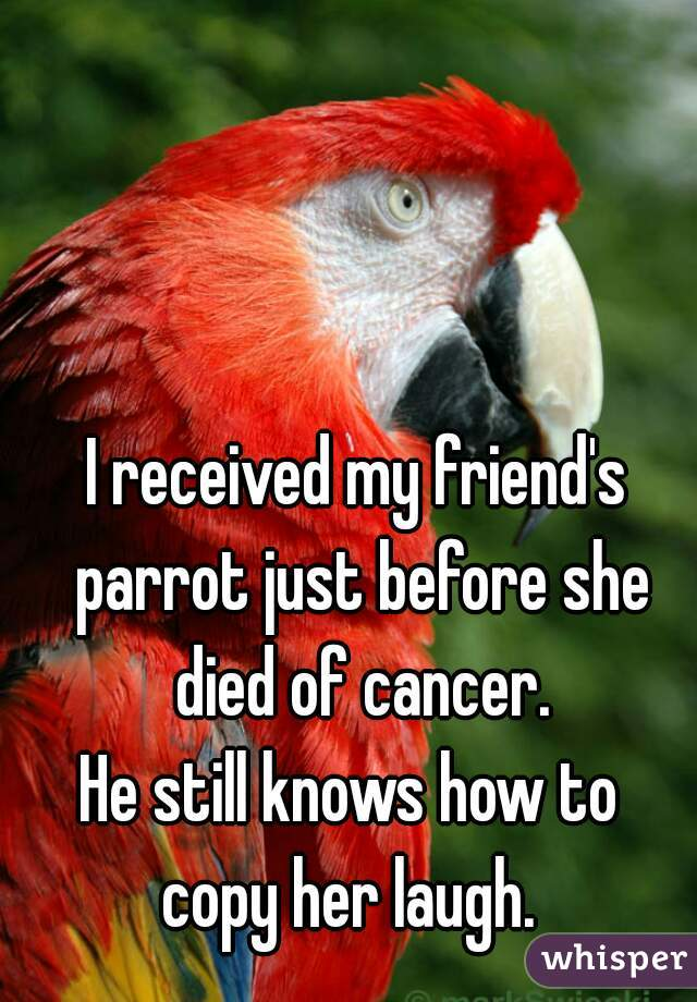 I received my friend's parrot just before she  died of cancer. He still knows how to  copy her laugh.