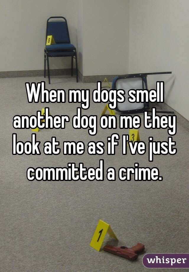 When my dogs smell another dog on me they look at me as if I've just committed a crime.