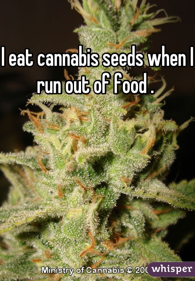 I eat cannabis seeds when I run out of food .