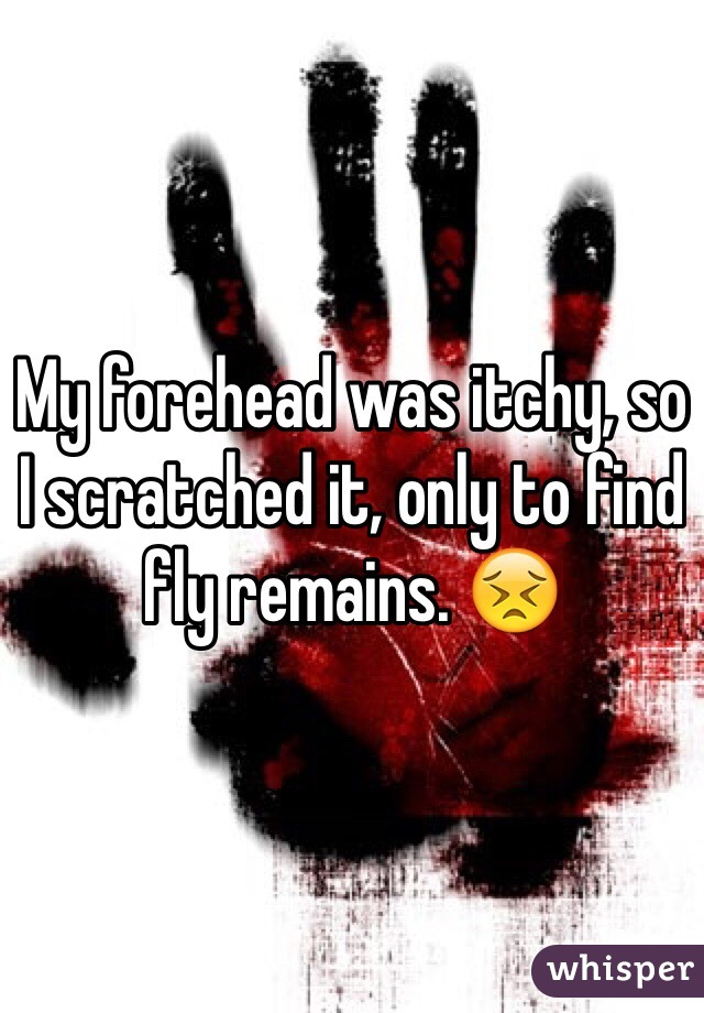 My forehead was itchy, so I scratched it, only to find fly remains. 😣
