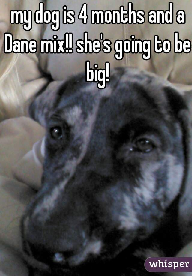 my dog is 4 months and a Dane mix!! she's going to be big!
