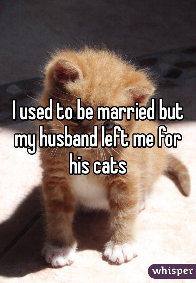 I used to be married but my husband left me for his cats
