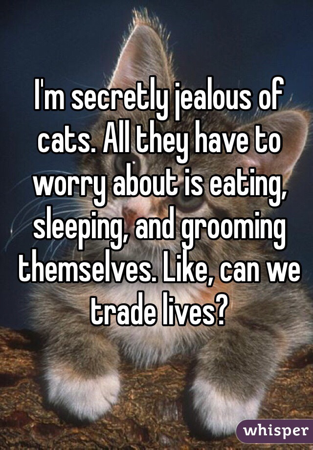 I'm secretly jealous of cats. All they have to worry about is eating, sleeping, and grooming themselves. Like, can we trade lives?