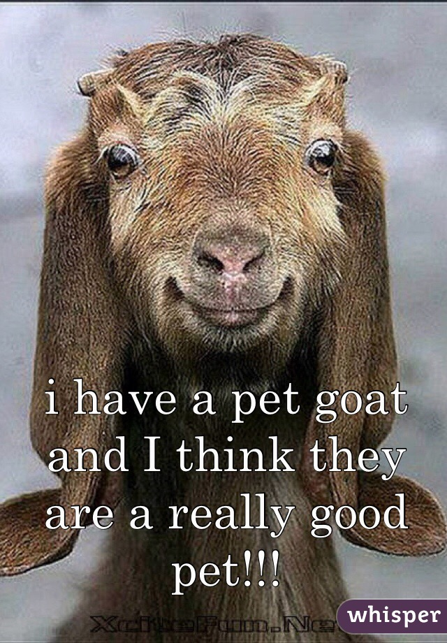 i have a pet goat and I think they are a really good pet!!!