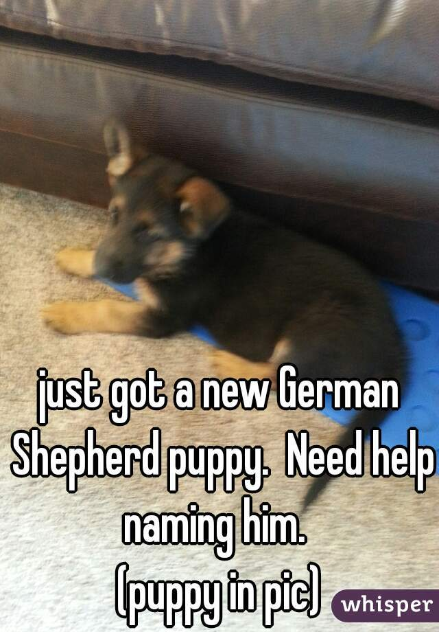 just got a new German Shepherd puppy.  Need help naming him.   (puppy in pic)