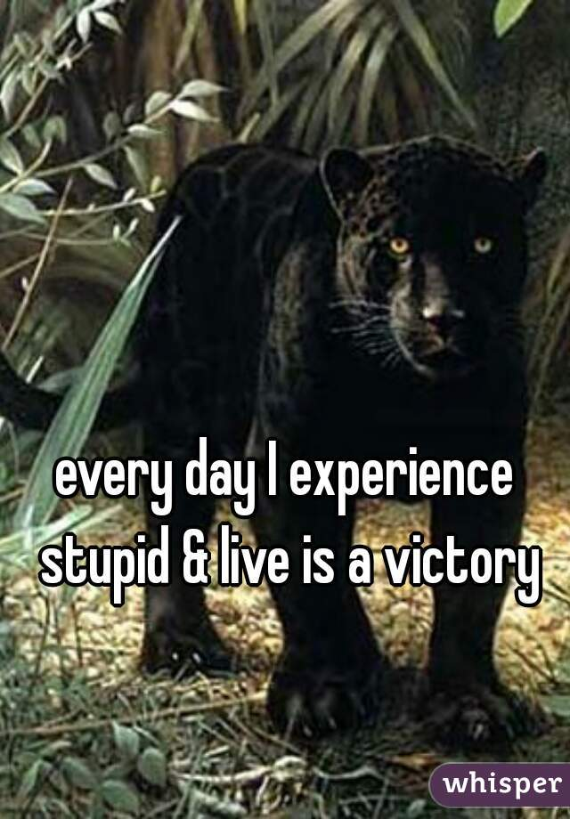 every day I experience stupid & live is a victory