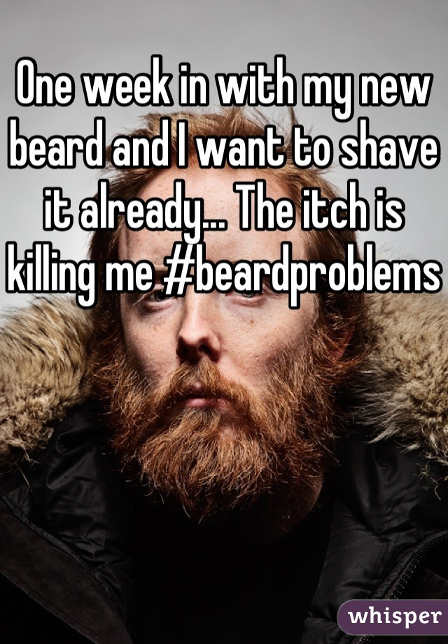 One week in with my new beard and I want to shave it already... The itch is killing me #beardproblems