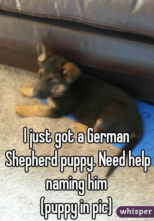 I just got a German Shepherd puppy. Need help naming him  (puppy in pic)