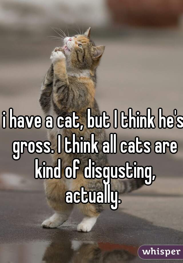 i have a cat, but I think he's gross. I think all cats are kind of disgusting, actually.
