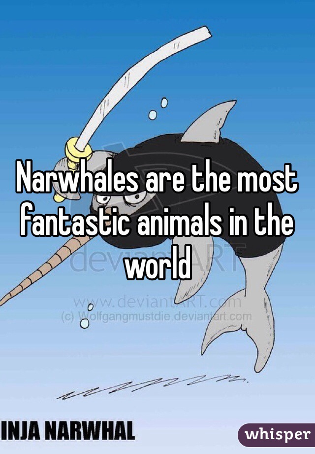 Narwhales are the most fantastic animals in the world
