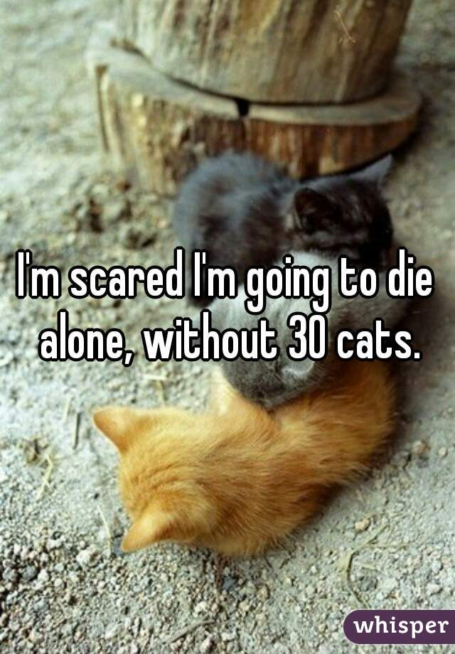 I'm scared I'm going to die alone, without 30 cats.