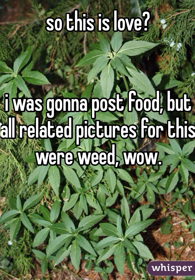 so this is love?   i was gonna post food, but all related pictures for this were weed, wow.