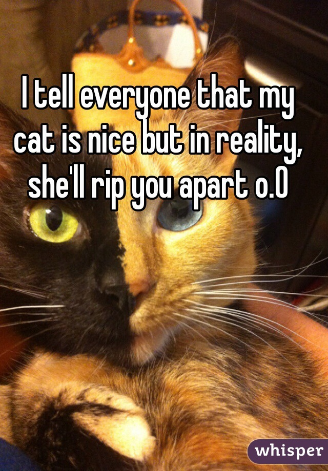 I tell everyone that my cat is nice but in reality, she'll rip you apart o.0