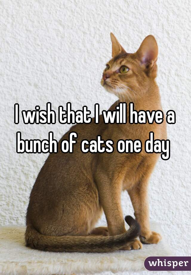 I wish that I will have a bunch of cats one day