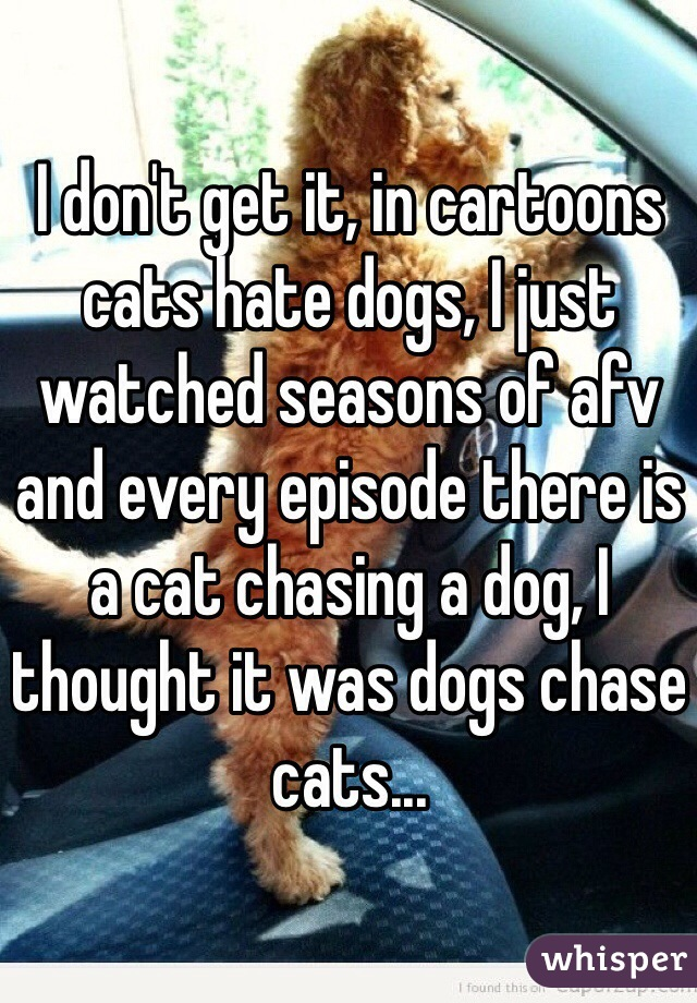 I don't get it, in cartoons cats hate dogs, I just watched seasons of afv and every episode there is a cat chasing a dog, I thought it was dogs chase cats...