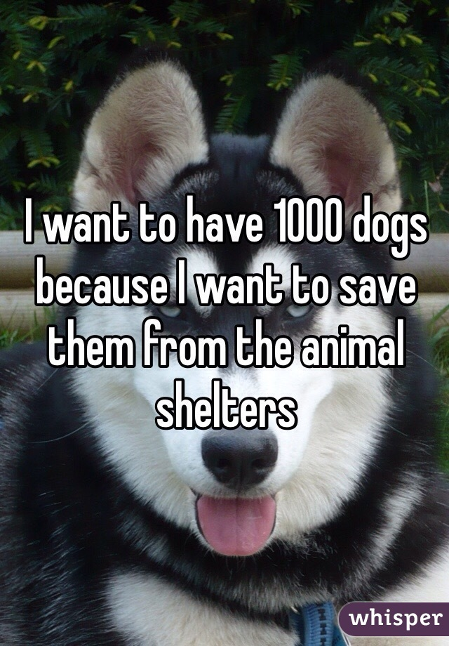 I want to have 1000 dogs because I want to save them from the animal shelters