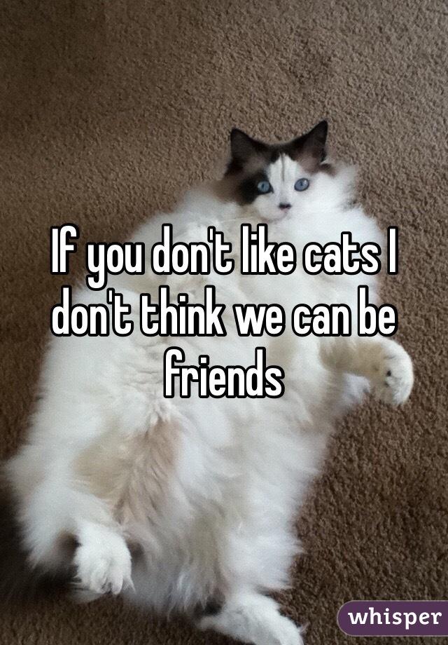 If you don't like cats I don't think we can be friends