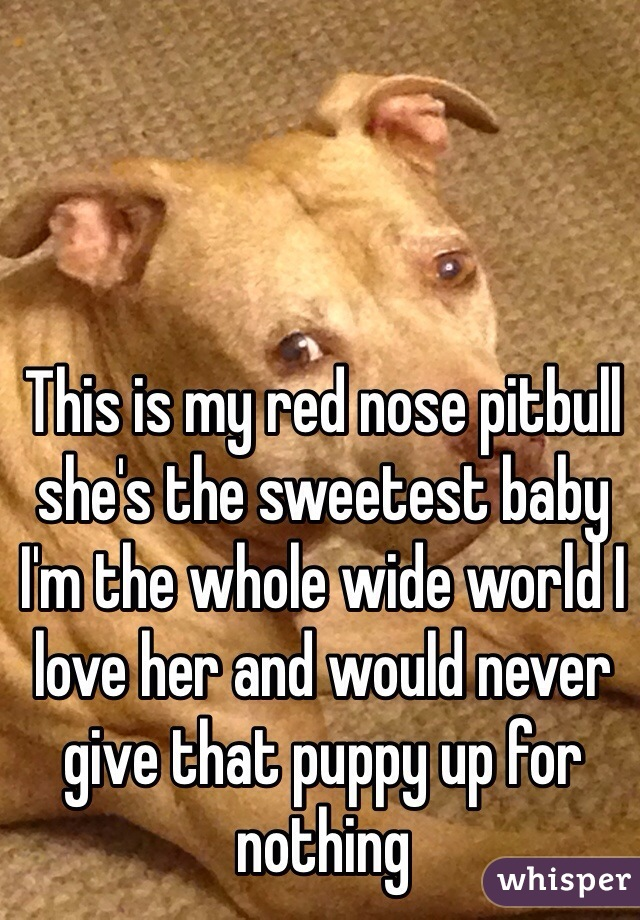 This is my red nose pitbull she's the sweetest baby I'm the whole wide world I love her and would never give that puppy up for nothing