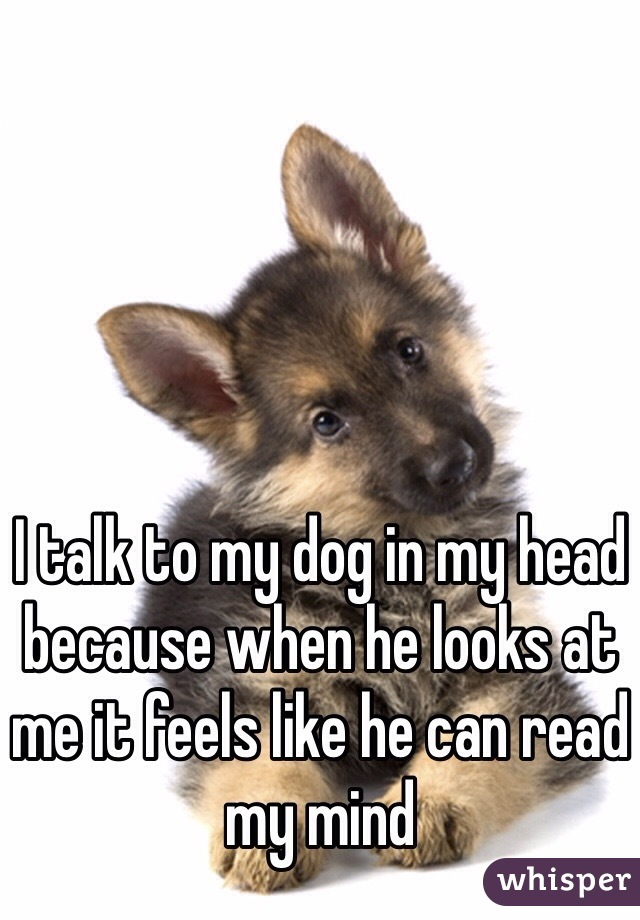 I talk to my dog in my head because when he looks at me it feels like he can read my mind