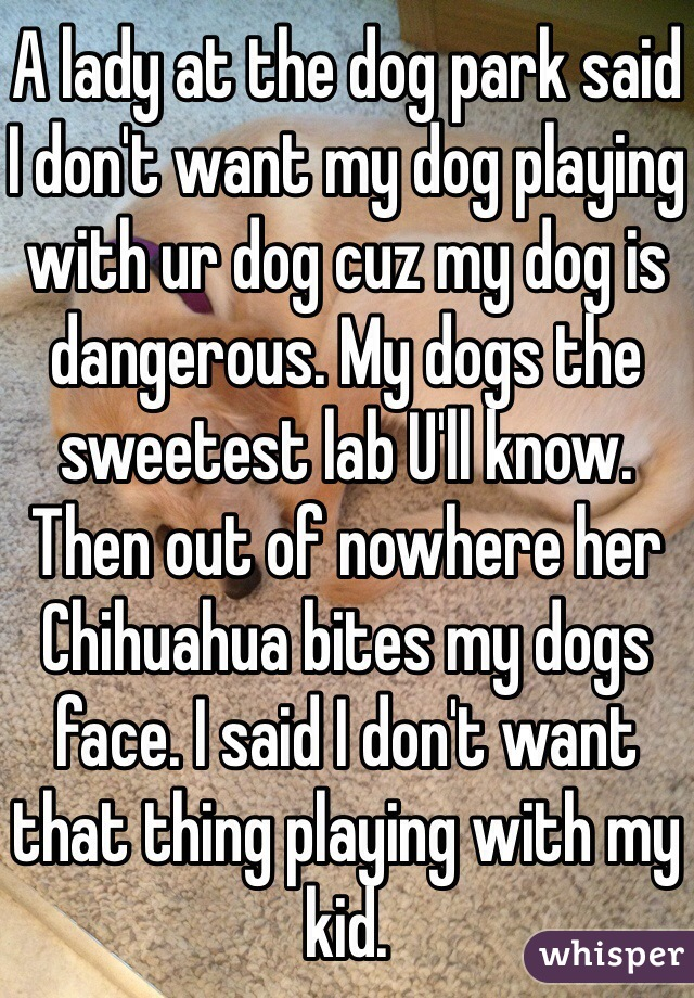 A lady at the dog park said I don't want my dog playing with ur dog cuz my dog is dangerous. My dogs the sweetest lab U'll know. Then out of nowhere her Chihuahua bites my dogs face. I said I don't want that thing playing with my kid.