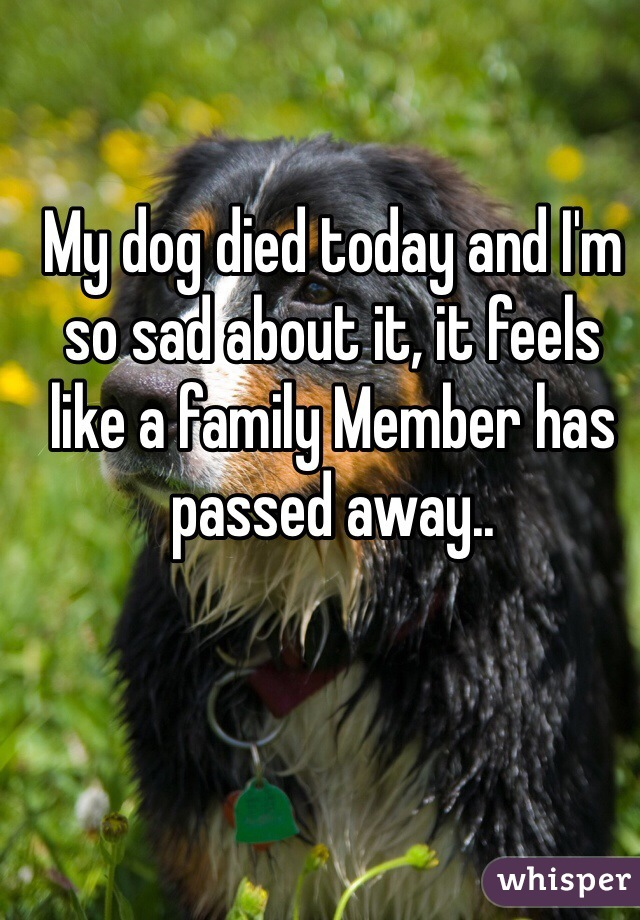 My dog died today and I'm so sad about it, it feels like a family Member has passed away..
