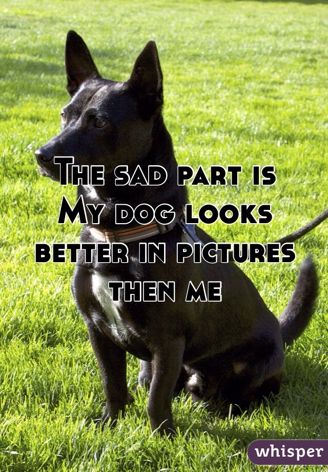 The sad part is My dog looks better in pictures then me