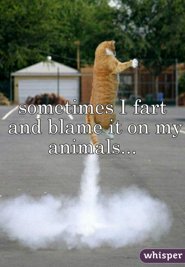 sometimes I fart and blame it on my animals...