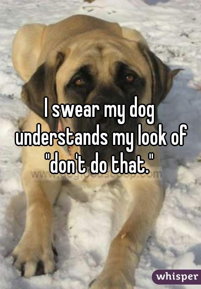 """I swear my dog understands my look of """"don't do that."""""""