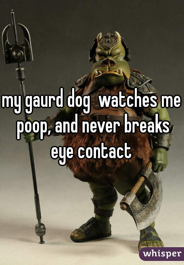 my gaurd dog  watches me poop, and never breaks eye contact
