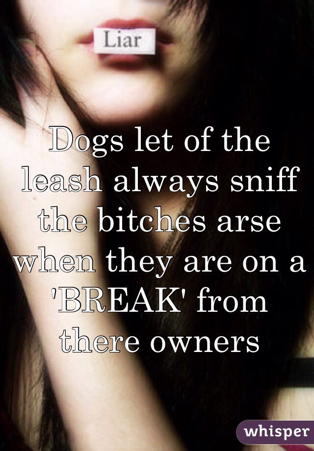 Dogs let of the leash always sniff the bitches arse when they are on a 'BREAK' from there owners