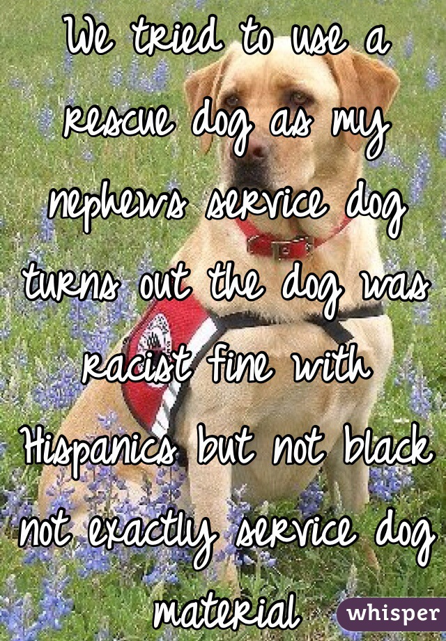 We tried to use a rescue dog as my nephews service dog turns out the dog was racist fine with Hispanics but not black not exactly service dog material