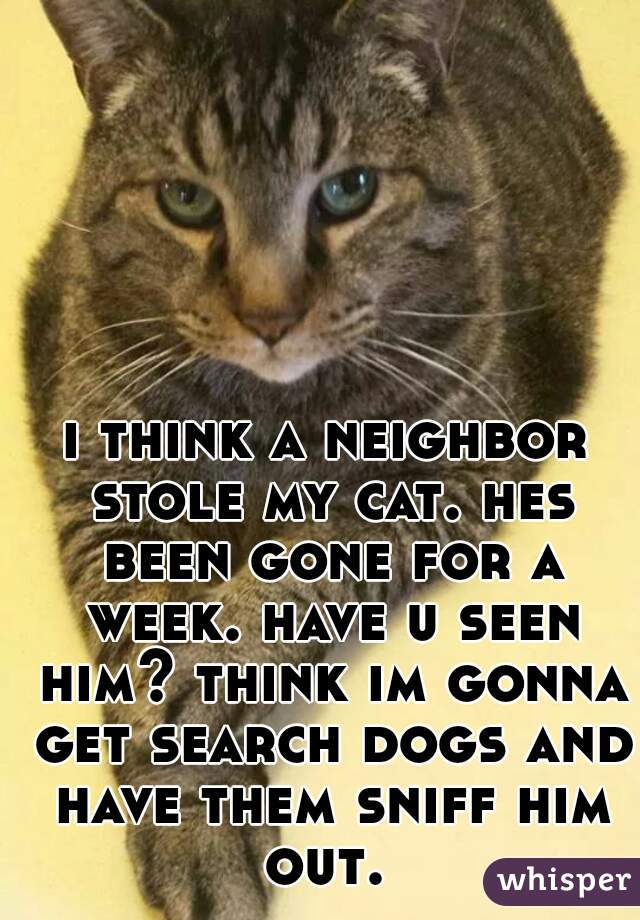 i think a neighbor stole my cat. hes been gone for a week. have u seen him? think im gonna get search dogs and have them sniff him out.