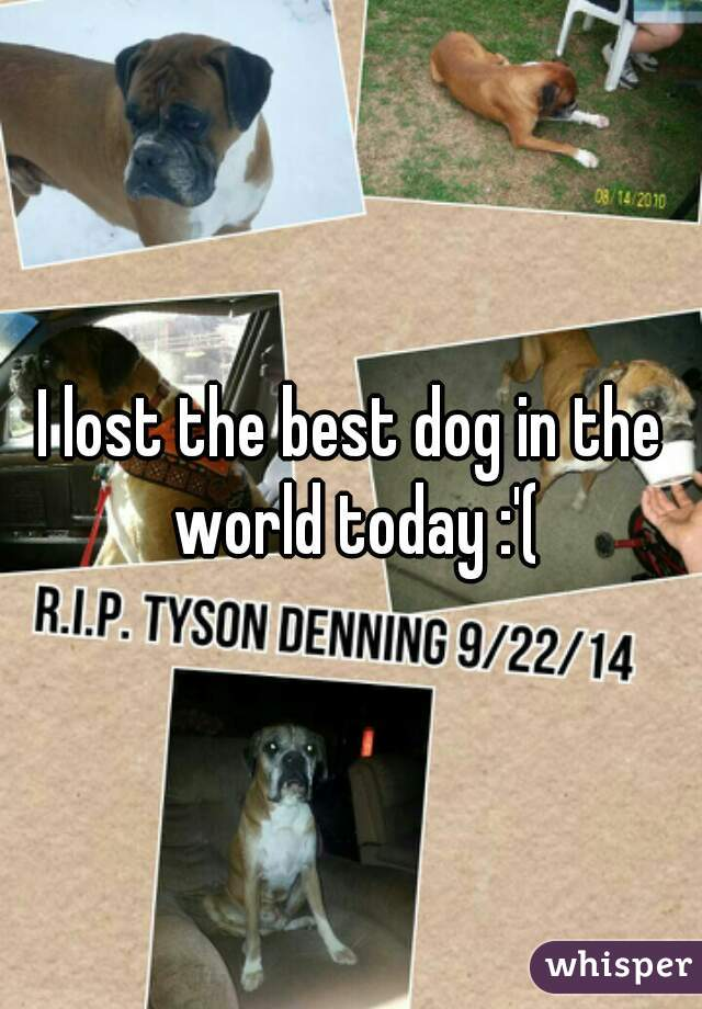 I lost the best dog in the world today :'(