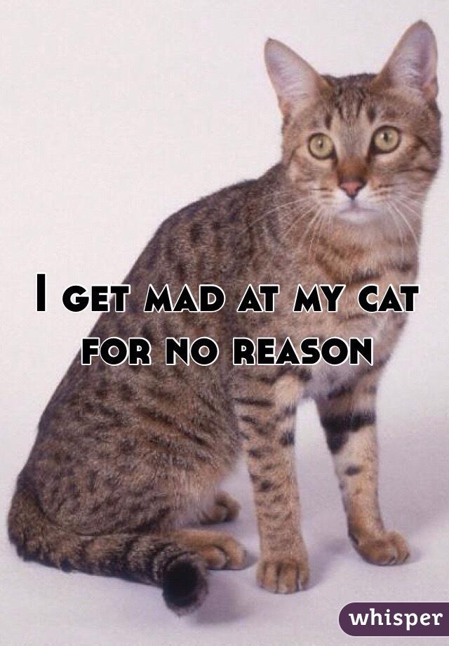 I get mad at my cat for no reason