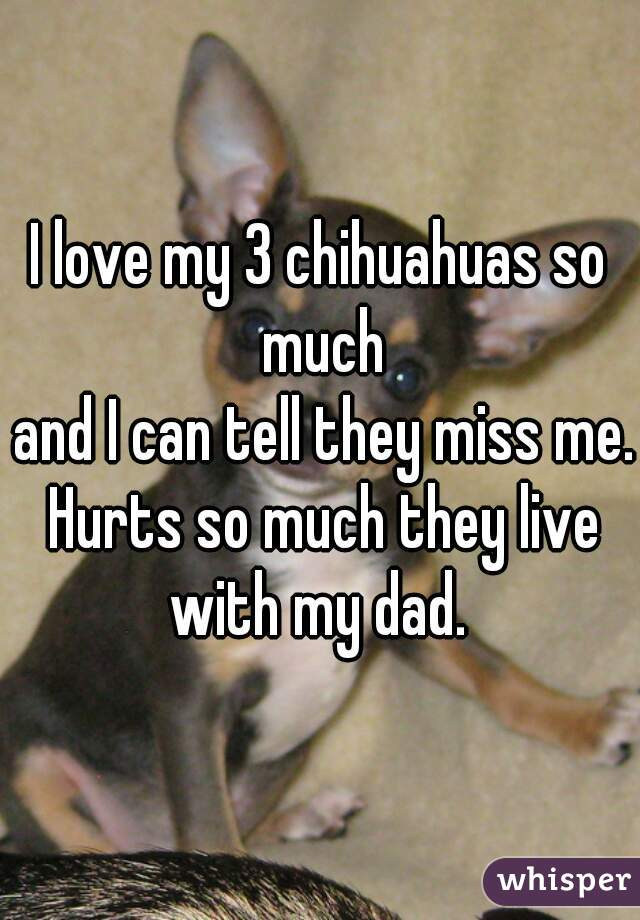 I love my 3 chihuahuas so much  and I can tell they miss me. Hurts so much they live with my dad.